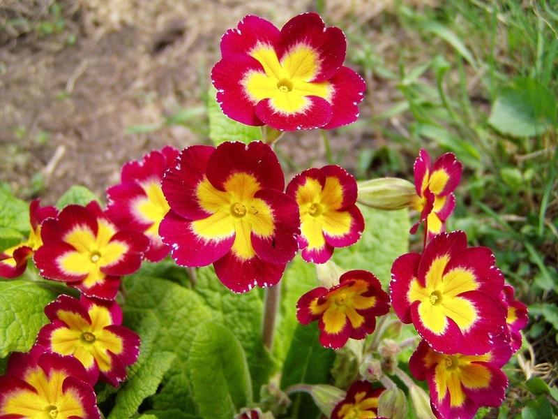 Теневыносливые растения: цветы и кустарники