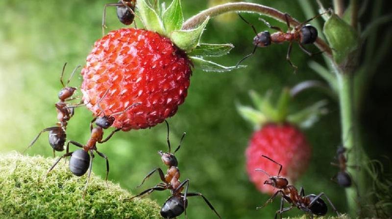 Избавляемся от муравьев на участке в два счета: лучшие методы
