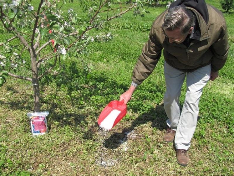 Лучшие органические и минеральные подкормки для плодовых деревьев