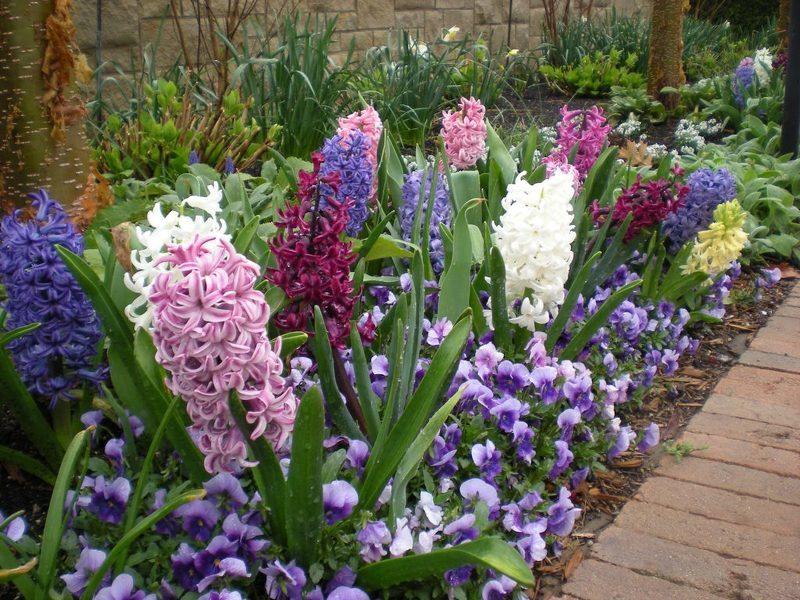 Подкормка луковичных и первоцветов: стимулируем рост и цветение
