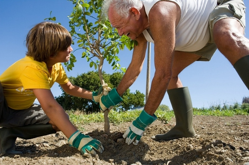 Какие саженцы плодовых деревьев можно сажать в июне