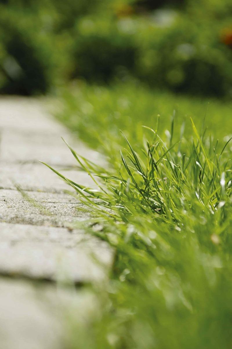 Как вырастить настоящий английский газон: советы от А. Раппопорта и GARDENA
