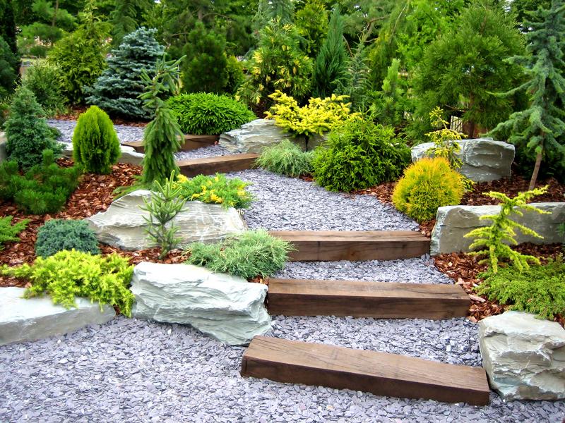 Декоративный хвойный сад: выбор и покупка саженцев, правила посадки