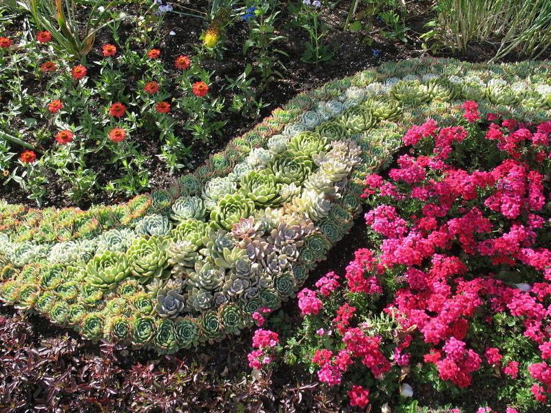 Выбираем неприхотливые долгоцветущие многолетники для украшения сада