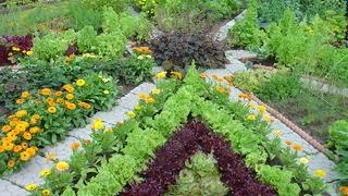 Сад и огород: особенности ухода фото