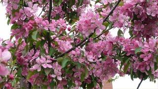Подкормка яблони весной фото