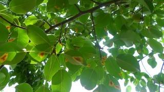Болезни растений: мозаика. Защита и профилактика