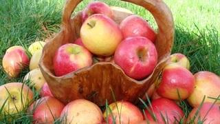 Яблоко полезные свойства и витаминный состав