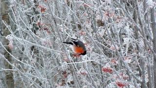 Зимний сад: ягоды и фрукты вместо цветов фото