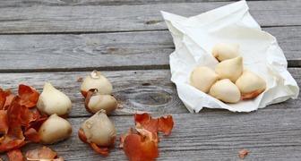 Высаживаем цветочные луковицы в сентябре