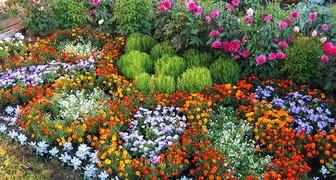 Сентябрь – время создания роскошного цветника