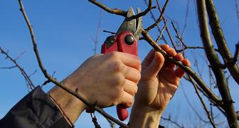 Сентябрьские заботы в саду: уход за деревьями