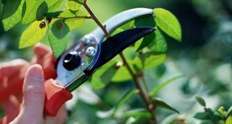 Обрезаем и защищаем от грызунов плодовые насаждения фото
