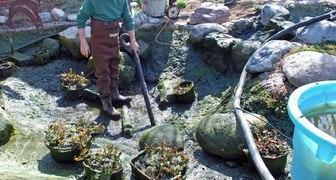 Очищаем водоем от растительных остатков