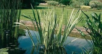 Очищаем воду в пруду природным способом