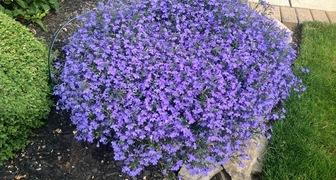 Подбираем цветущие растения для террасы