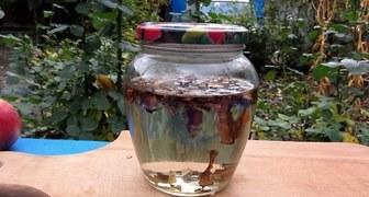 Настойка из водки на перепонках грецких орехов