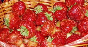 Сорта семян клубники: Сашенька и Лизонька