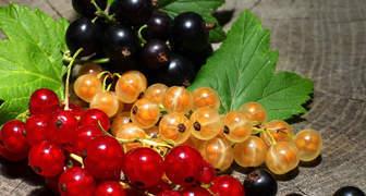 Польза и вред ягод и листьев смородины для организма фото