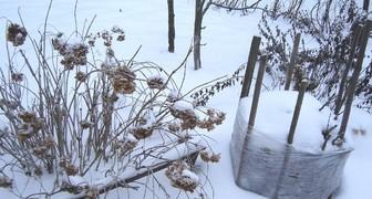 Утепление снегом и защита плодовых деревьев
