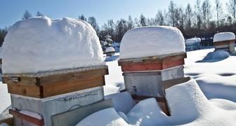 Проверка ульев: заботы пчеловода в декабре