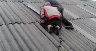 Протекает крыша: как провести быстрый ремонт зимой