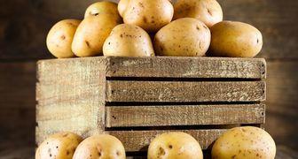 5 ошибок при хранении картофеля