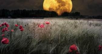 Влияние луны и её положения на рост и развитие растений