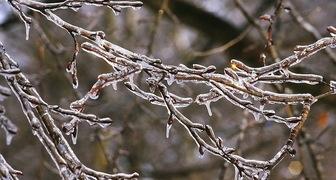Как спасти сад от зимней оттепели: рекомендации по уходу