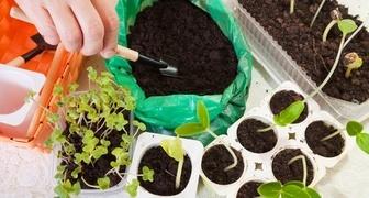 Сроки посадки семян овощей на рассаду фото