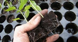 Подготовка посадочного места и земли для посева семян на рассаду фото