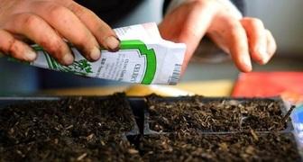 Когда сажать семена на рассаду: точные даты по лунному календарю