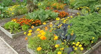 Планируем посадки: разберемся в совместимости растений и овощей фото