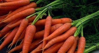 Посев моркови в открытый грунт: секреты щедрого урожая
