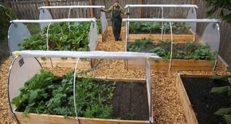 Что посеять в марте? Какие овощи и зелень посадить в грунт фото
