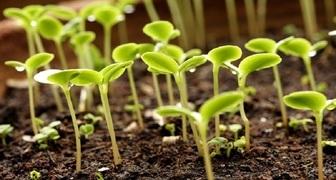 Как вырастить здоровую рассаду: 15 правил для идеального результата фото