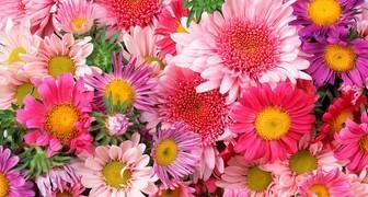Сроки посева цветов на рассаду и в грунт: что пора сеять в феврале