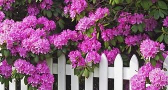 Обрезка декоративных растений: секреты красивой живой изгороди