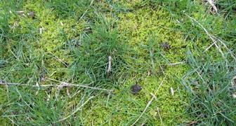 Весь газон покрыт мхом и лишайником: устраняем причину и лечим лужайку