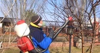 Лучшие и проверенные средства от вредителей сада, огорода и рассады фото
