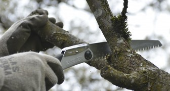 Обрезка деревьев и кустарников: секреты формирования красивого сада