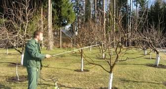 Санитарная обработка деревьев весной: лечим сад от лишайника