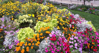 Какие цветы посеять, чтобы в начале лета получить прекрасную клумбу