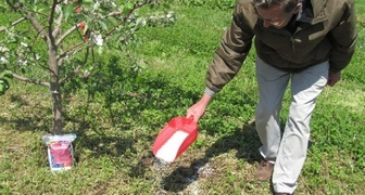 Лучшие органические и минеральные подкормки для плодовых деревьев фото