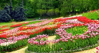 Весенний фестиваль цветов в Аптекарском огороде фото