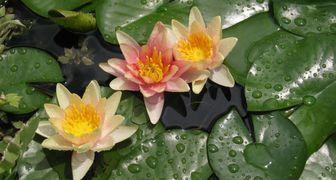 Какие растения посадить в водоеме, чтобы не навредить рыбкам