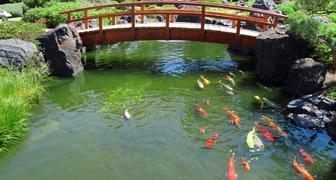 Каких рыбок выращивать в садовом пруду, и как его подготовить