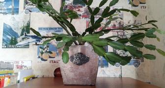 Пересадка комнатных растений фото