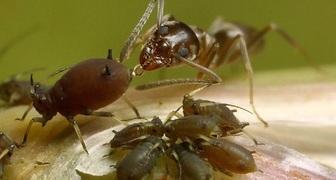 Эффективные методы защиты смородины от самых опасных паразитов