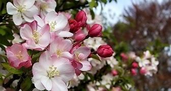 Календарь садовода на май. Таблица